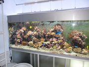 Изготовление,  оформление,  обслуживание аквариумов морских и пресных