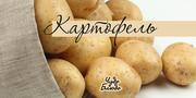 Картофель в большом количестве звонить 8-777-655-86-20 8-701-679-92-43