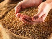Предлагаем качественное кормовое зерно. ( фураж.)